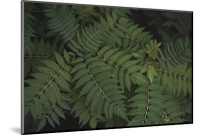 Leafy VI-Elizabeth Urquhart-Mounted Photographic Print