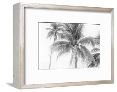 Breezy II-Elizabeth Urquhart-Framed Photographic Print