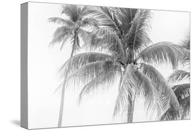 Breezy II-Elizabeth Urquhart-Stretched Canvas Print