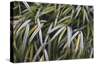 Leafy IV-Elizabeth Urquhart-Stretched Canvas Print