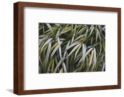 Leafy IV-Elizabeth Urquhart-Framed Photographic Print
