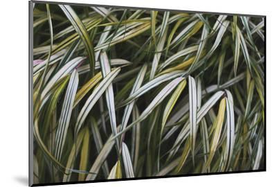 Leafy IV-Elizabeth Urquhart-Mounted Photographic Print