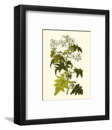 Olive Greenery VI-0 Unknown-Framed Art Print