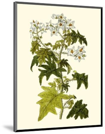 Olive Greenery VI-0 Unknown-Mounted Art Print