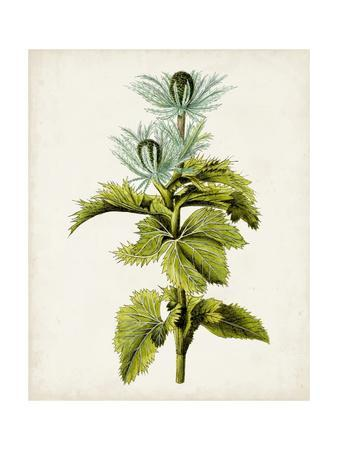 Antique Botanical Study III-0 Unknown-Framed Art Print