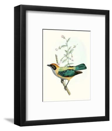 On Perch II-0 Unknown-Framed Art Print