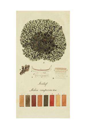Species of Lichen VI-0 Unknown-Framed Art Print