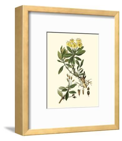 Olive Greenery IV-0 Unknown-Framed Art Print