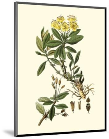 Olive Greenery IV-0 Unknown-Mounted Art Print