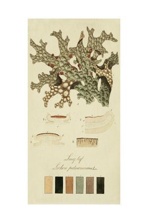 Species of Lichen III-0 Unknown-Framed Art Print