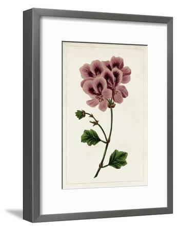 Mauve Botanicals III-0 Unknown-Framed Art Print