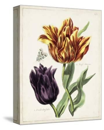 Tulip Classics III-0 Unknown-Stretched Canvas Print