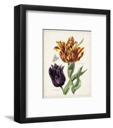 Tulip Classics III-0 Unknown-Framed Art Print