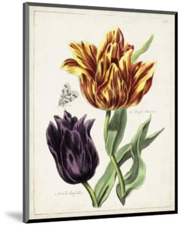 Tulip Classics III-0 Unknown-Mounted Art Print