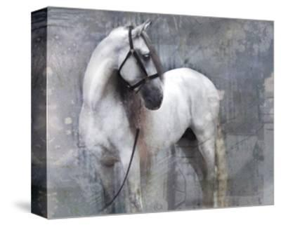 Horse Exposures II-Susan Friedman-Stretched Canvas Print