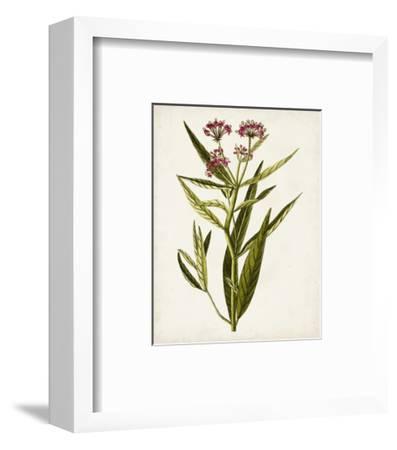 Antique Botanical Study VIII-0 Unknown-Framed Art Print