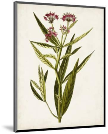 Antique Botanical Study VIII-0 Unknown-Mounted Art Print