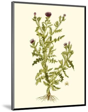 Olive Greenery II-0 Unknown-Mounted Art Print