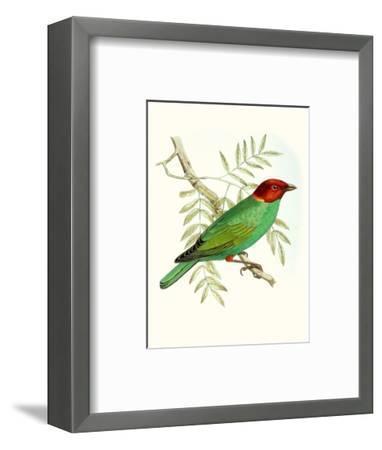 On Perch V-0 Unknown-Framed Art Print