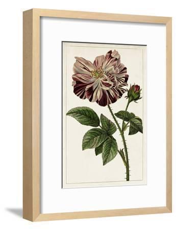 Mauve Botanicals V-0 Unknown-Framed Art Print