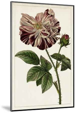 Mauve Botanicals V-0 Unknown-Mounted Art Print