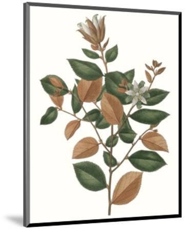 Fall Foliage IX-0 Unknown-Mounted Art Print