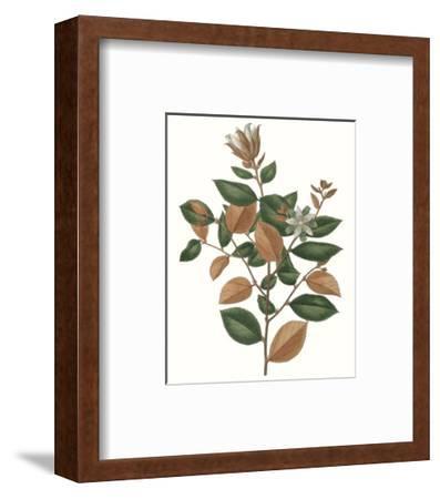 Fall Foliage IX-0 Unknown-Framed Art Print