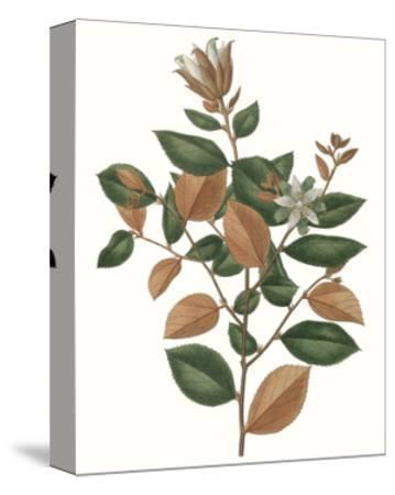 Fall Foliage IX-0 Unknown-Stretched Canvas Print