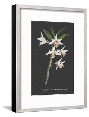 Orchid on Slate IV-Vision Studio-Framed Art Print
