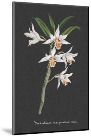 Orchid on Slate IV-Vision Studio-Mounted Art Print