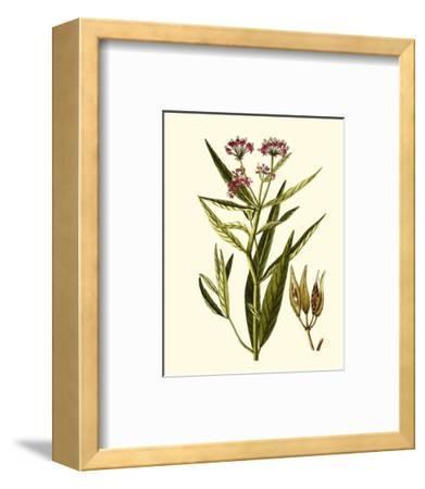 Olive Greenery VIII-0 Unknown-Framed Art Print