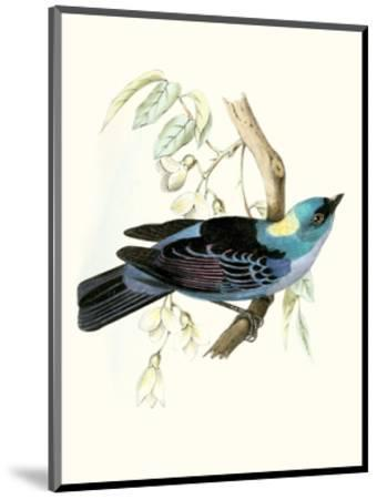 On Perch VII-0 Unknown-Mounted Art Print