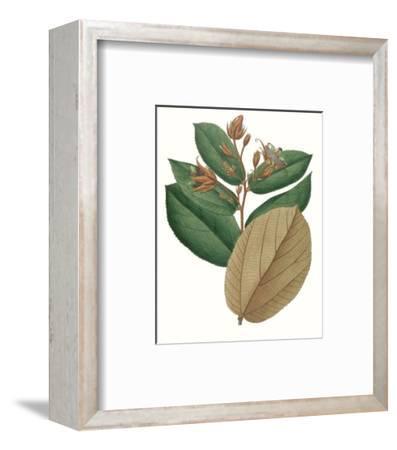 Fall Foliage III-0 Unknown-Framed Art Print