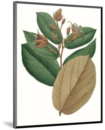 Fall Foliage III-0 Unknown-Mounted Art Print