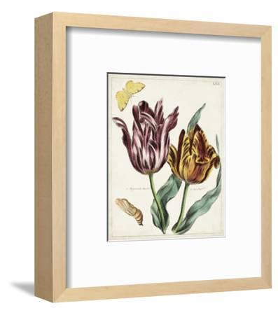 Tulip Classics II-0 Unknown-Framed Art Print