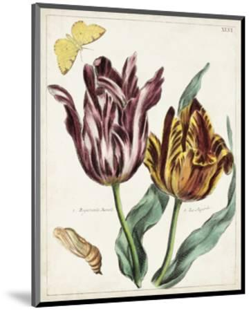 Tulip Classics II-0 Unknown-Mounted Art Print