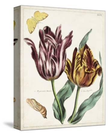 Tulip Classics II-0 Unknown-Stretched Canvas Print