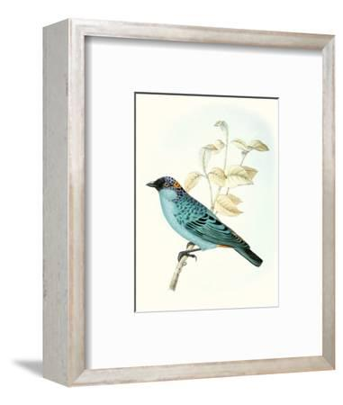On Perch XII-0 Unknown-Framed Art Print
