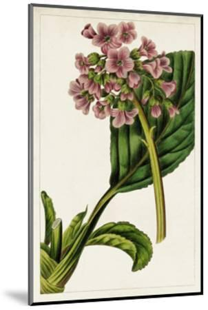 Mauve Botanicals II-0 Unknown-Mounted Art Print