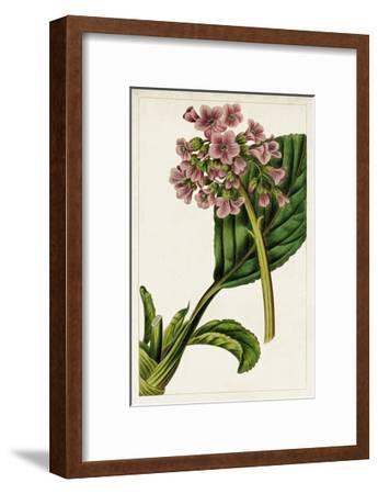 Mauve Botanicals II-0 Unknown-Framed Art Print