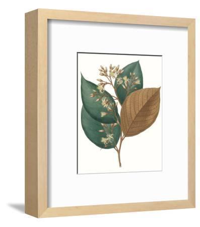 Fall Foliage V-0 Unknown-Framed Art Print