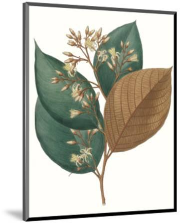 Fall Foliage V-0 Unknown-Mounted Art Print