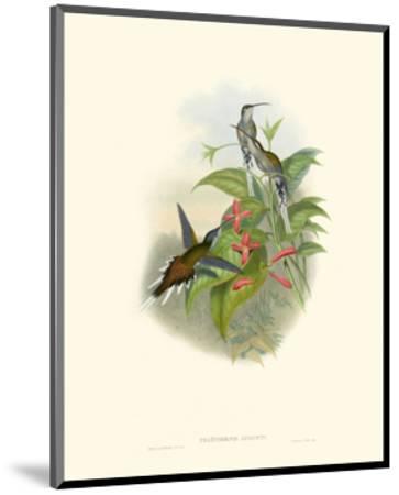 Hummingbird Delight IV-John Gould-Mounted Art Print
