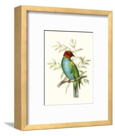On Perch IV-0 Unknown-Framed Art Print