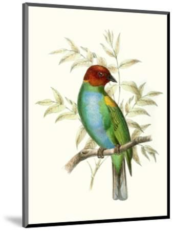 On Perch IV-0 Unknown-Mounted Art Print
