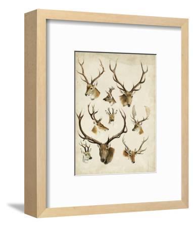 Western Animal Species II-0 Unknown-Framed Art Print