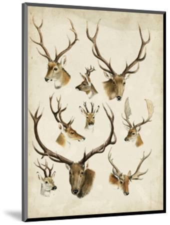 Western Animal Species II-0 Unknown-Mounted Art Print