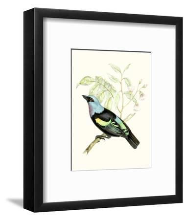 On Perch X-0 Unknown-Framed Art Print