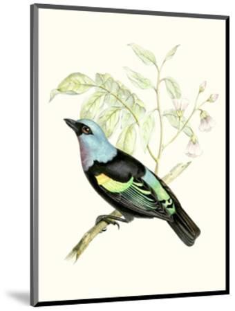 On Perch X-0 Unknown-Mounted Art Print