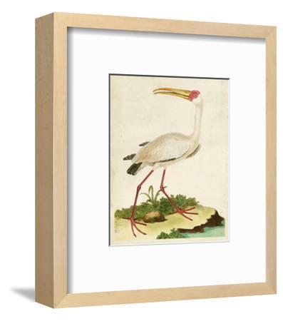 Heron Portrait VII-0 Unknown-Framed Art Print